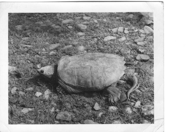 turtle img188