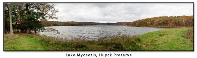 myosotis-panorama-cropped.jpg