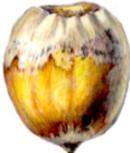 acorn-enh-newsletter-crop
